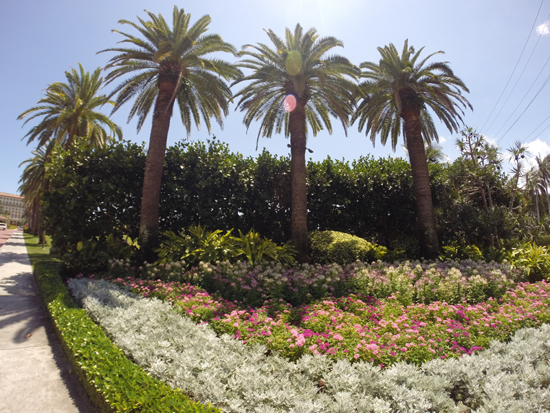 Residential Landscape Design and Maintenance Palm Beach Florida