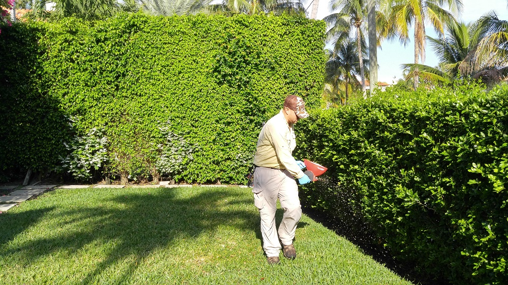 Landscape Maintenance West Palm Beach Weed Control