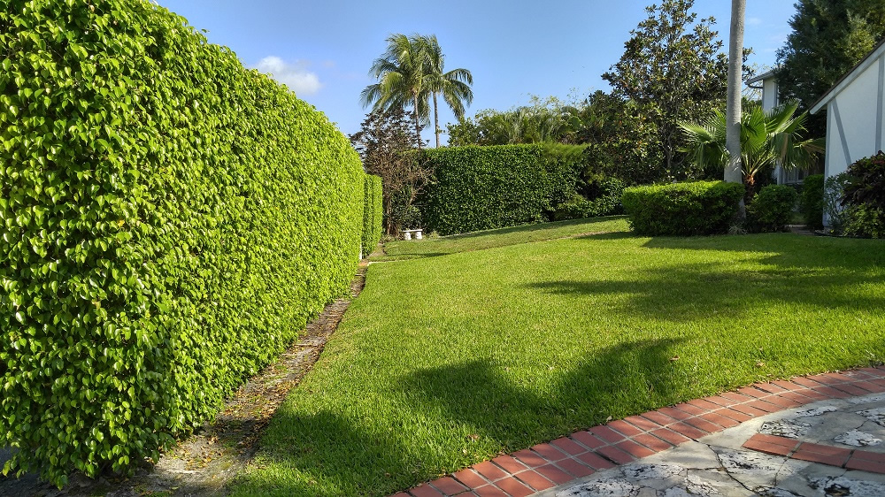 Jupiter farms o 39 hara landscape maintenance west palm for Weeds garden maintenance
