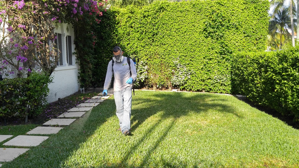 Lawn Disease Care Palm Beach Shores