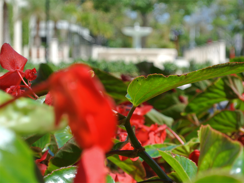 Residential Landscaping Company in Wellington Florida