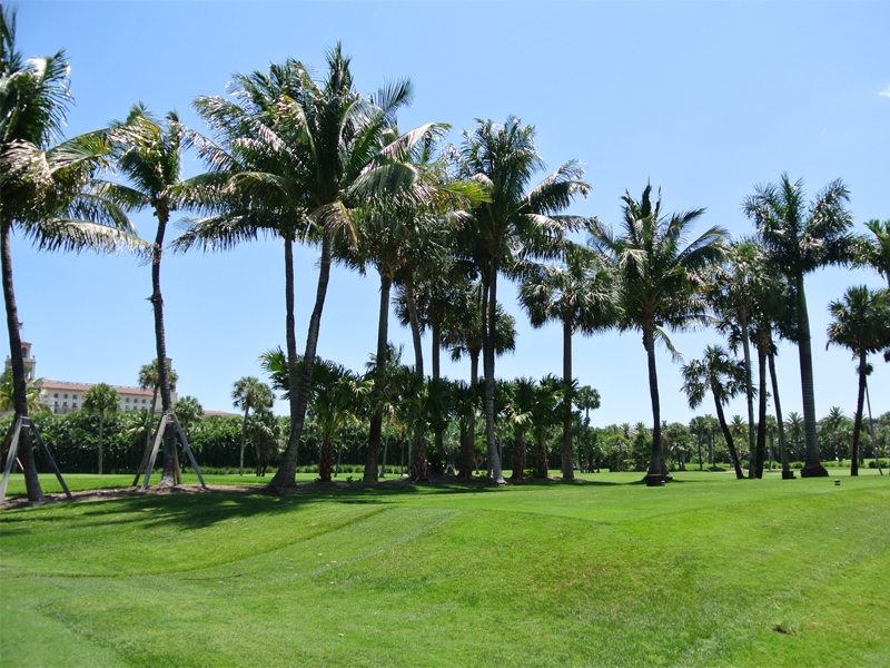 Palm Beach Gardens Lawn Care